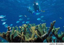 Scuba divers explore corals at risk of bleaching in Elliot Key, Florida