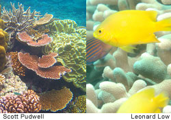 Comparative photos showing healthy and bleached corals illustrate what rising ocean temperatures and increasing acidification might mean for Australia's Great Barrier Reef.